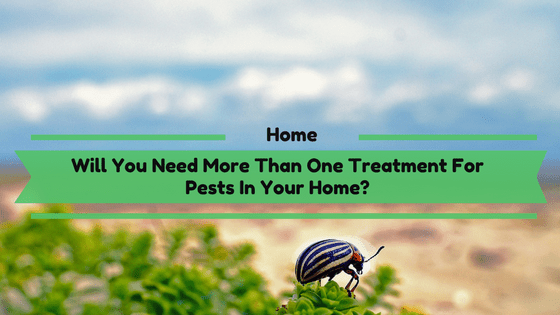 Will You Need More Than One Treatment For Pests In Your Home?